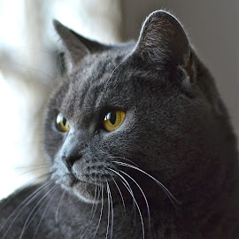 Emeraude*** by Serge Ostrogradsky - Animals - Cats Portraits ( chartreux,  )