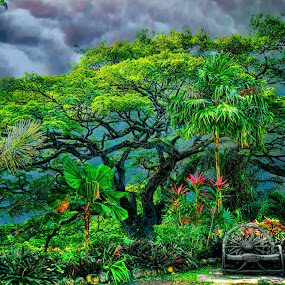 St. Kitts Saaman Tree by Tom Reiman - Nature Up Close Trees & Bushes ( tree, colorful, large, saaman,  )