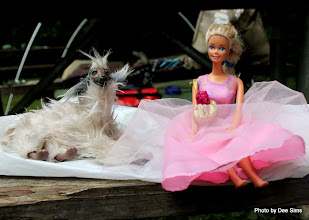 Photo: (Year 2) Day 341 - Barbie and the Barbie Afghan Hound