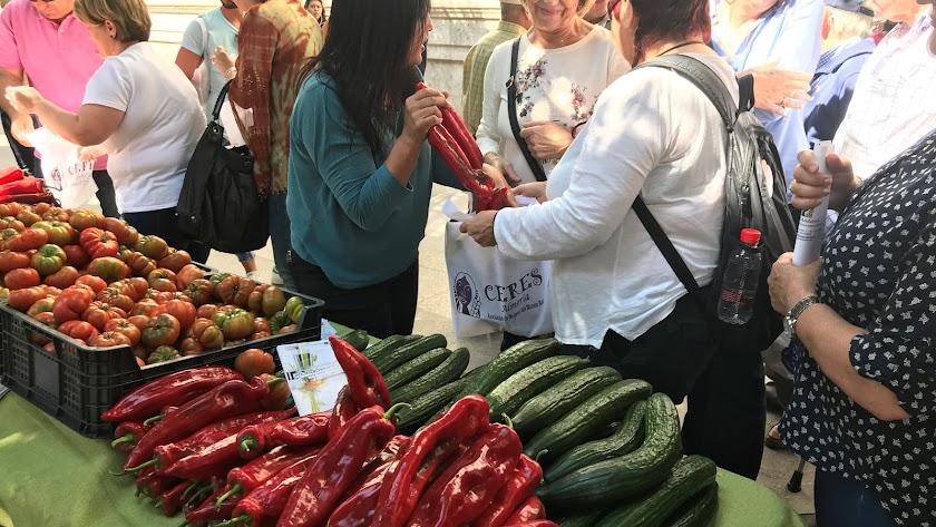 Reparto de hortalizas en el Paseo contra los transgénicos