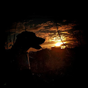 A Labrador, a hole in a wall, and a sunset by Matthew Miller - Animals - Dogs Portraits