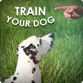 Dog Training - Train your Dog