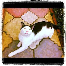 Photo: Pet portrait #cat #pet #intercer #romania - via Instagram, http://instagr.am/p/MC06yapftK/