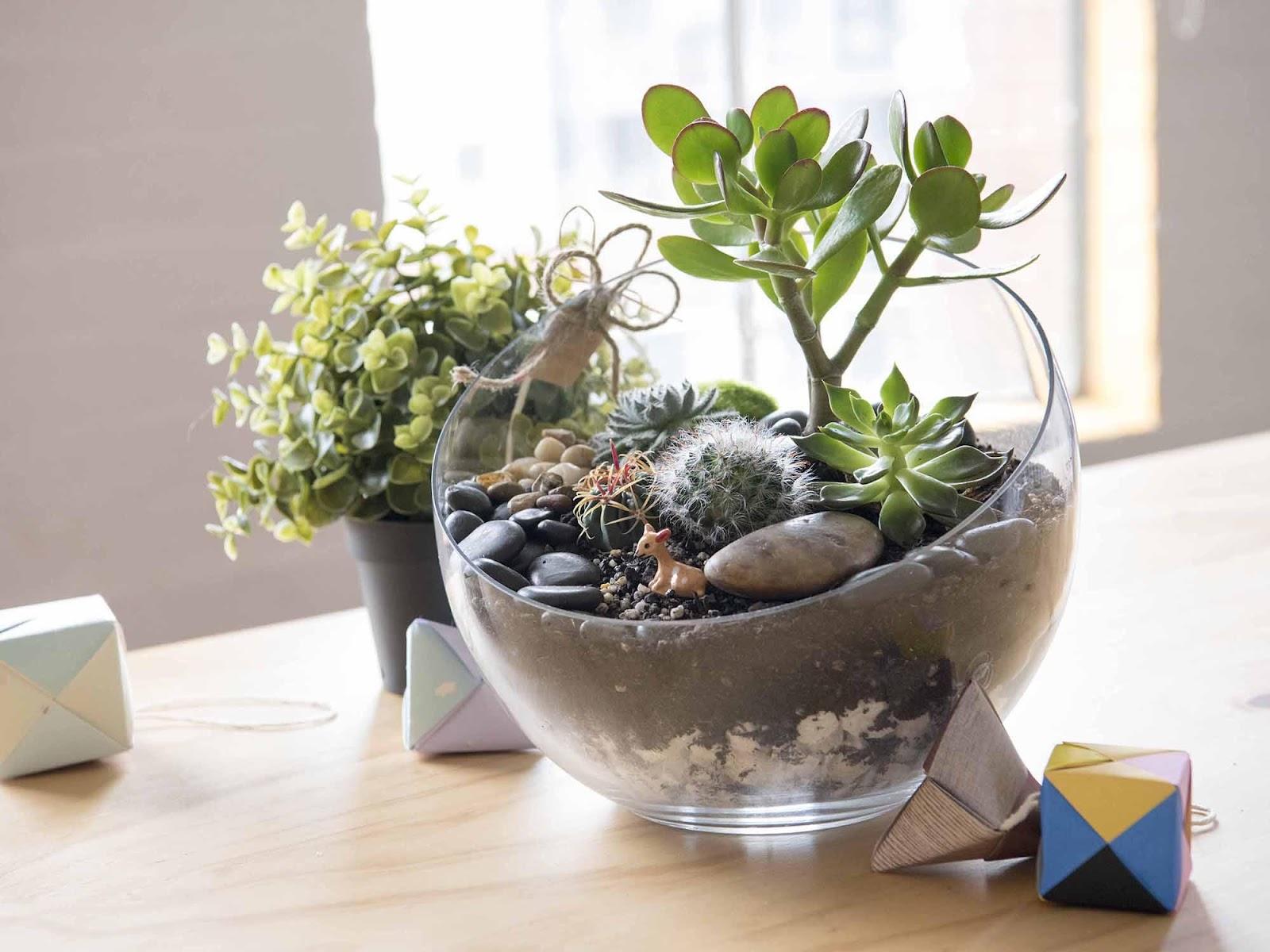 How to Make a Self-Sustaining Terrarium