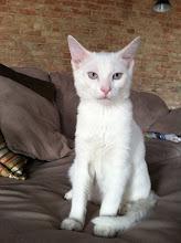 Photo: Frankie, my deaf kitty