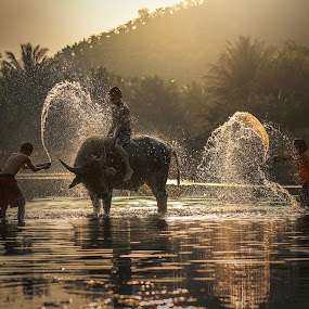 Livelihoods of rural children . by Visoot Uthairam - Uncategorized All Uncategorized ( countryside, person, reflection, splash, tropical, thailand, farmland, thai, landscape, people, chinese, asian, farm, clean, farmer, village, his, nature, swim, lifestyle, bath, wash, asia, smile, cambodia, man, china, animal, water, buffalo, rice, paddy, beautiful, agriculture, planting, lake, traditional, cattle, bull, mammal, rural, farming, country, myanmar, herd, cultivate, outdoor, natural, culture, river )