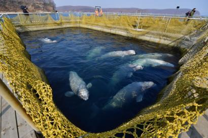 Image result for russian whale jail