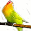 Masteran suara burung Lovebird icon
