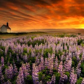Old Gods by Kaspars Dzenis - Landscapes Sunsets & Sunrises ( clouds, strandarkirkja, iceland, sky, hurch, nature, sunset, reykjanes, lupine, dramatic, beauty, landscape, flower )
