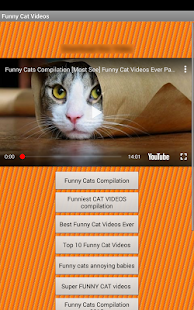Cat Videos - náhled