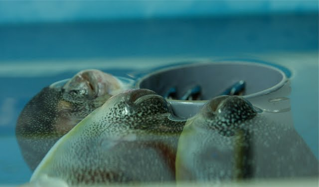 pohang fish