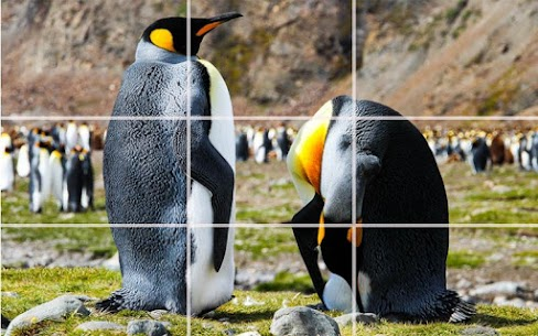 Puzzle – Bears and penguins 4