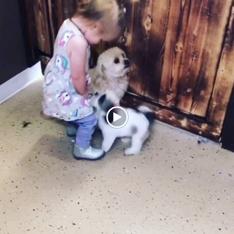 CYNS DOG HOUSE - Pet Groomer in Spokane valley