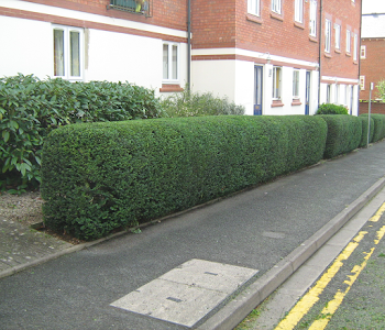 road side hedge trimming worcester