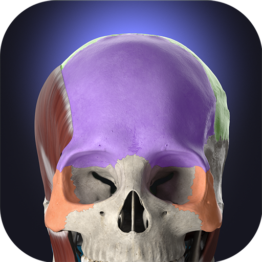 Anatomyka - 3D human anatomy