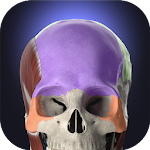 Anatomyka - 3D Human Anatomy Atlas 1.5.0