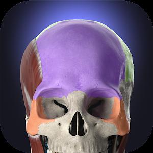 Anatomyka 3D Human Anatomy Atlas 2.0.8 by Woodoo Art s.r.o. logo