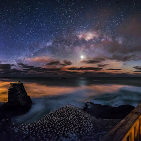Muriwai Gannet Colony Milky Way by Mikey Mackinven - Landscapes Starscapes ( gannets, nebulas, muriwai, stars, nz, panorama, new zealand, venus, milky way,  )