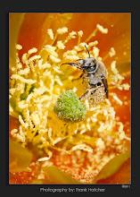 Photo: http://www.azproimage.com  or  http://www.hatch1921.com