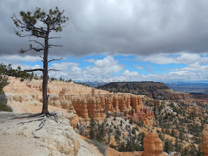 Photo: Pine, clouds and rock.