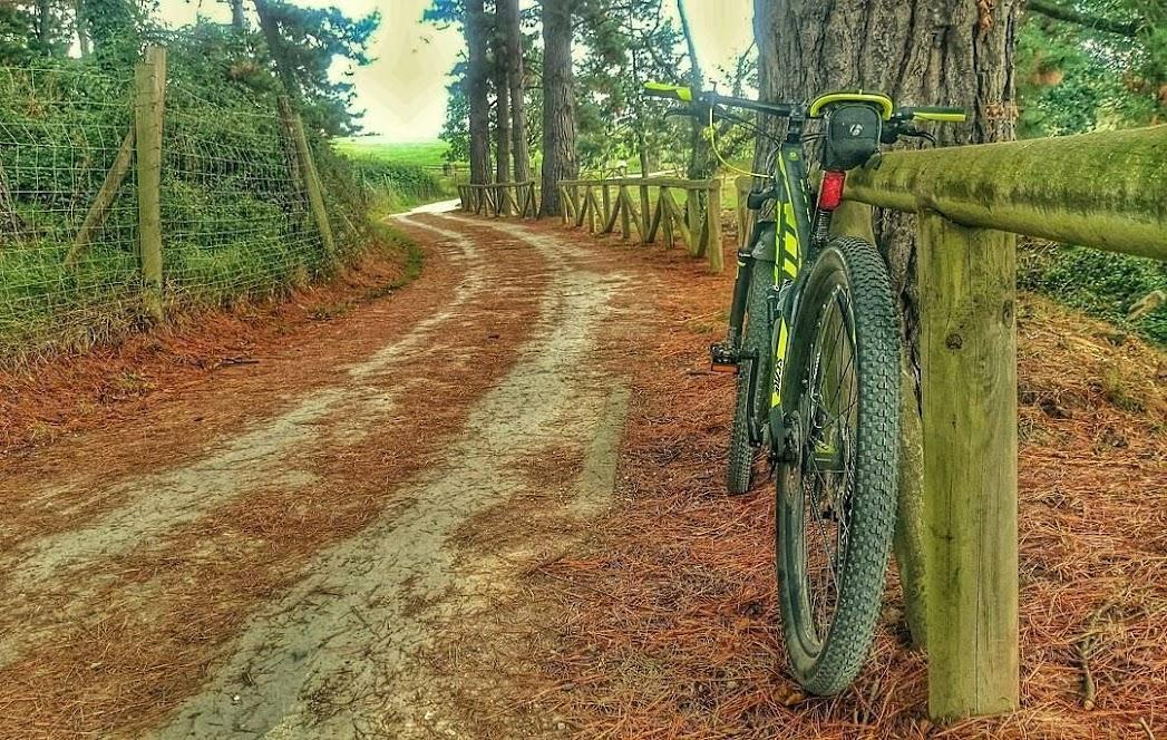 bosque instagram XC