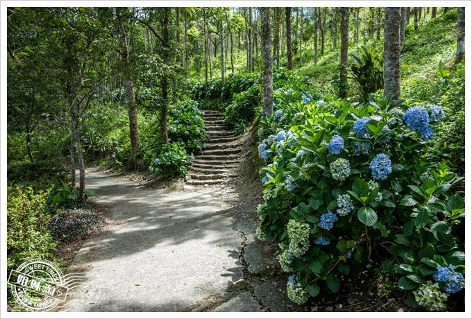 繡球花步道