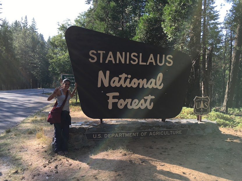 parque forestal de Yosemite