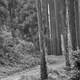 DEB#14 by Debanjan Goswami - Landscapes Forests ( 05-01-2017 )