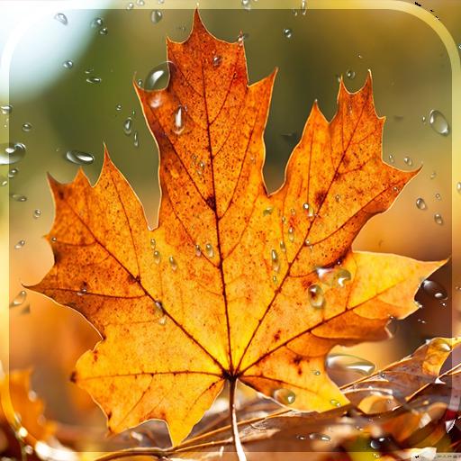 Jesen Besplatno Uživo Tapeta Kišne Kapi Pozadina Aplikacije