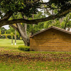 The cottage by Pilar Gonzalez - City,  Street & Park  City Parks ( cottage, auturmn leaves, sunny afternoon, autumn colors, trees shades,  )