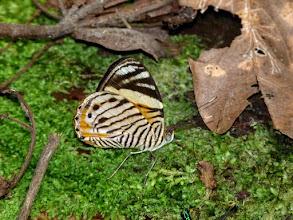 Photo: TIGER BEAUTY--APUYA TRAIL