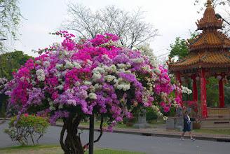Photo: A walk in Lumpini Park