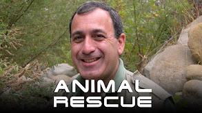 Animal Rescue thumbnail