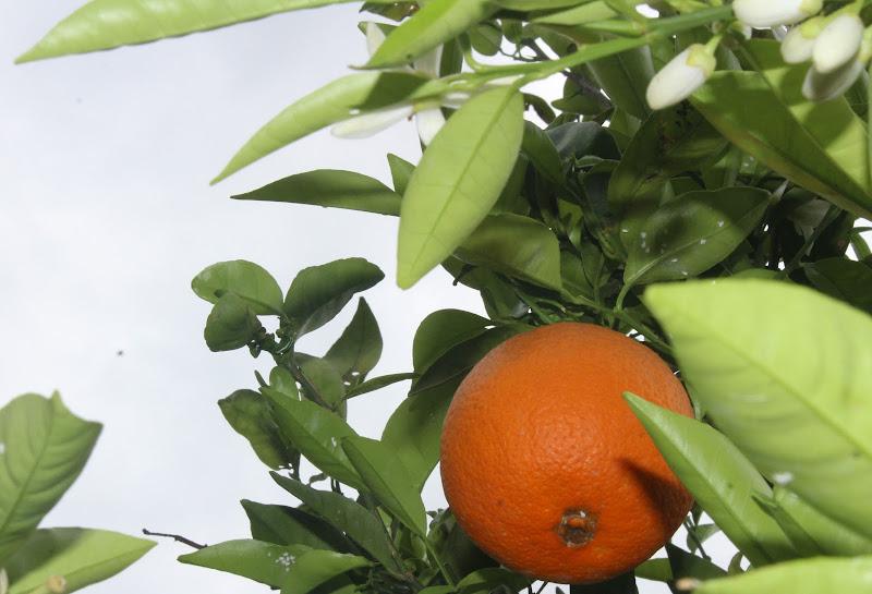 Orange  di arianna_tratzi