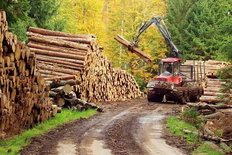 Drewno do budowy domu szkieletowego