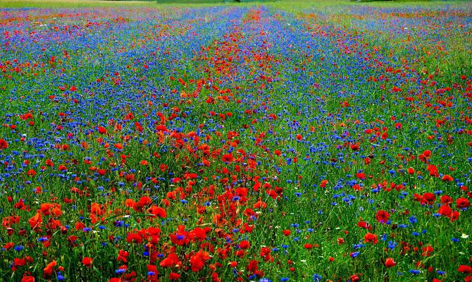Tappeto rosso verde e blu di gianluca_simotti