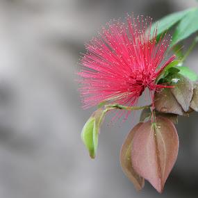 Red flower by Debbie Duggar - Flowers Single Flower