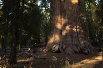 Photo: General Sherman tree