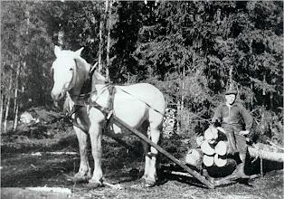 Photo: Västantorp 1945, Levi Eriksson och hästen Fritjof lunnar timmer.