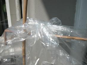 Photo: Sonra düğüm içerde kalacak biçimde torbayı ters yüz edip bambuların tepesine geçiriyoruz...