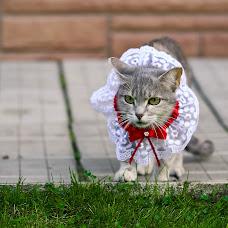 Свадебный фотограф Анна Жукова (annazhukova). Фотография от 21.10.2015