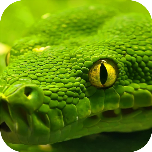 Green snake. Live wallpapers