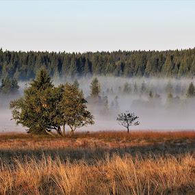 podzim  by Jarka Hk - Landscapes Forests ( tree, fog, autumn, meadow, landscape )