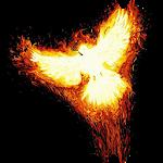 Fiery bird in darkness Live WP