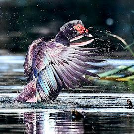 Bird 216~Q by Raphael RaCcoon - Animals Birds