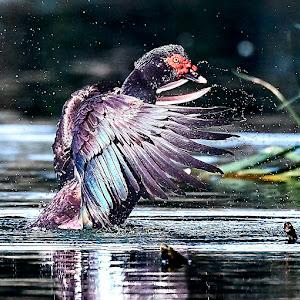 Bird 216~Q.jpg