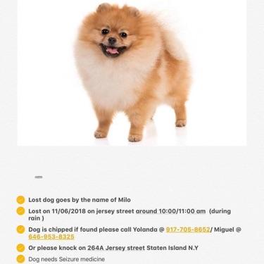 Milo, MISSING Nov 6, 2018