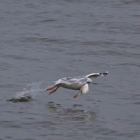 Hey, what else? by Владимир Агруц - Animals Birds ( bird, seagull, sea )