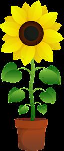 grow_sun_flower_04_720