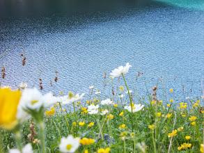 Photo: Pentes fleuries au dessus de l'Etg Rond